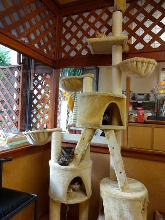 猫の生るタワー