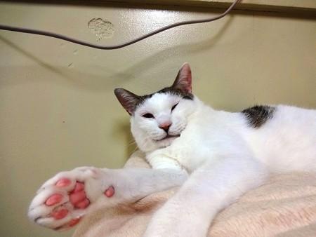 ハッチ「でもやっぱり、ふかふかなところで寝るのが一番好きです」