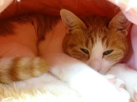 オリーブ「あったかいベッドで寝るのよ」