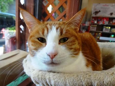 オリーブ「ハンモックも寝心地いいのよ♪」