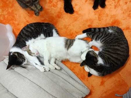 ココアを枕に、サブレを足枕にする桃
