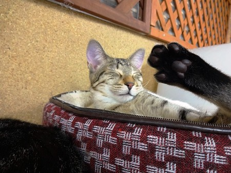 マサキ「おいらと一緒に寝ないかい?」