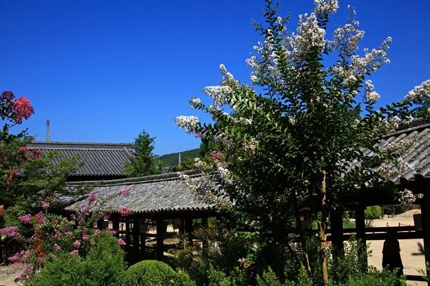 吉備津神社、百日紅&回廊