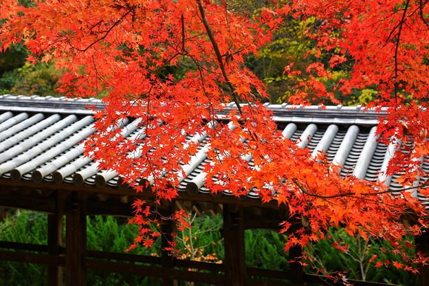 吉備津神社、廻廊の紅葉 ♪