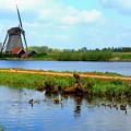 Photos: オランダの風車とカモさん家族 ☆