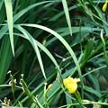 写真: トンボ池のトンボ