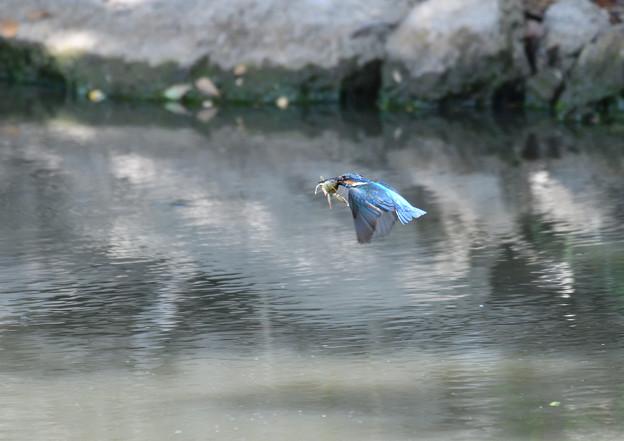 ザリガニの飛翔