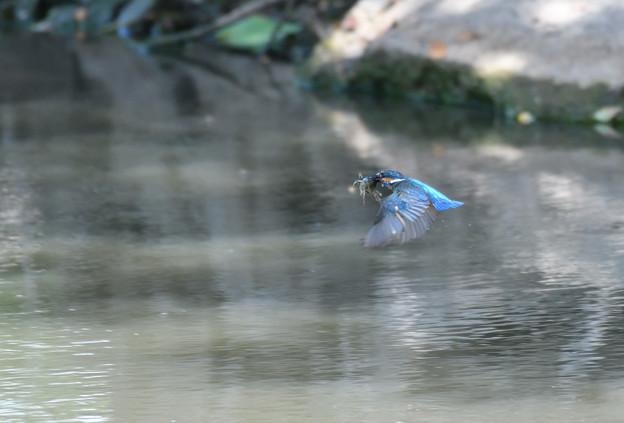 ザリガニの飛翔 (2)