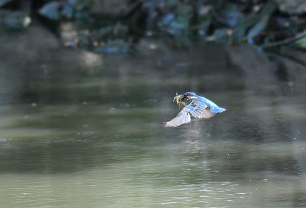 ザリガニの飛翔 (3)