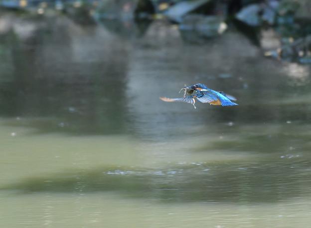 ザリガニの飛翔 (4)