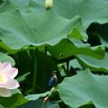 花よりトンボ (3)