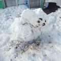 写真: 翌日のチェブラーシカ雪だるま。照れながらおじぎしてるんでしょう、きっと。かわいい(*^^*)