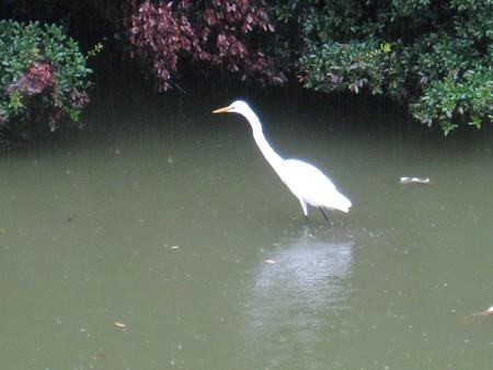 大仙陵古墳の白鳥2