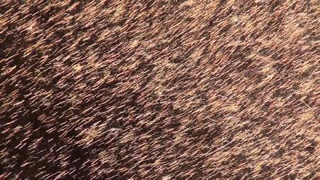 三河手筒花火04-光の織物