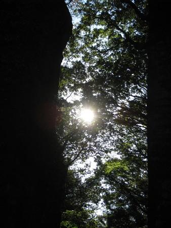 鋸山日本寺 参道の木漏れ日