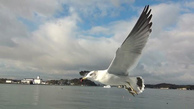 松島湾 海猫G-6