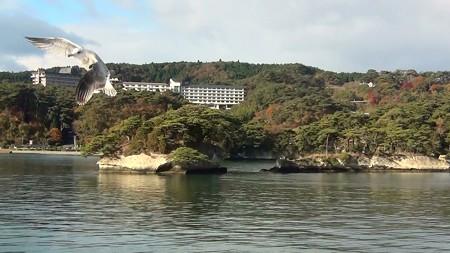 松島湾遊覧 島巡り1