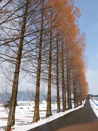 飛騨高山高山田校の並木道3