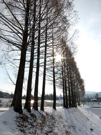 飛騨高山高山田校の並木道8