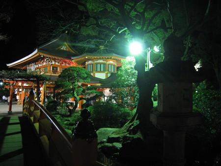 千葉神社 夜8  ねがい橋1 20090101