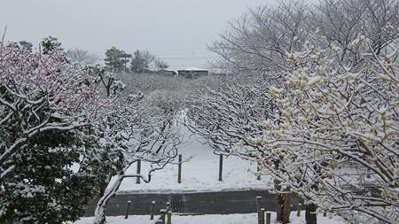 20140211-1 梅林雪景色