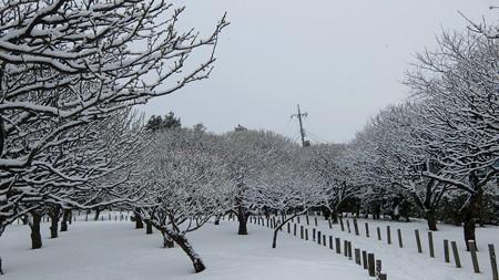 20140211-7 梅林雪景色