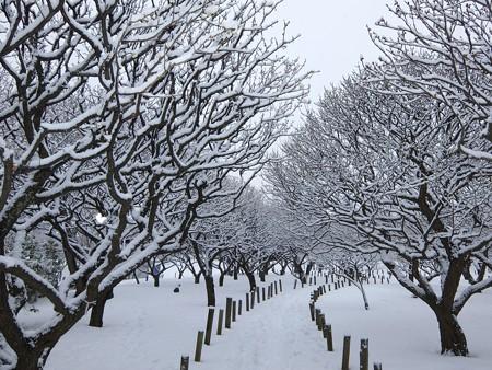 20140211-11 梅林雪景色