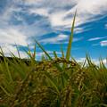 Photos: 20120821-IMGP0771