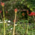 Photos: 20120925-IMGP1421