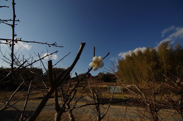 Photos: 20130109-IMGP3321