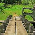 湿地帯の中のベンチ
