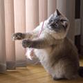 Photos: 少々暑苦しいやつ 03