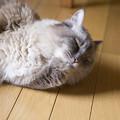 Photos: 少々暑苦しいやつ 05
