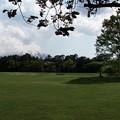 芝生と富士