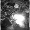 Photos: 凍てつく夜に II