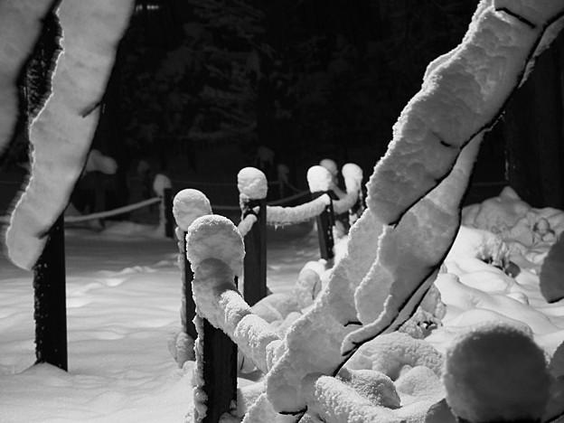 Photos: 白い綿帽子