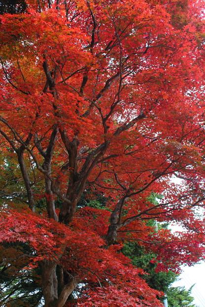 一字観公園の紅葉3