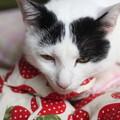 写真: 猫さんに枕~マカロン編