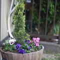 写真: 庭の樽