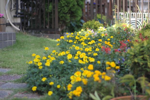 写真: ワイルドになっている庭