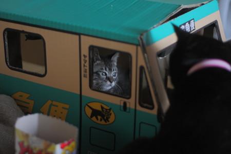 黒猫に襲われるクロネコ