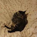 写真: おっさん仔猫
