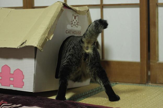 写真: 突撃