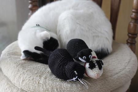 組み体操俵猫