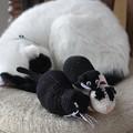 写真: 組み体操俵猫