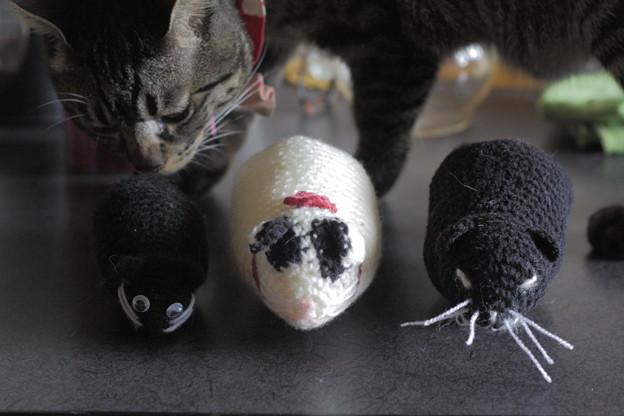 写真: 俵猫並べてみた