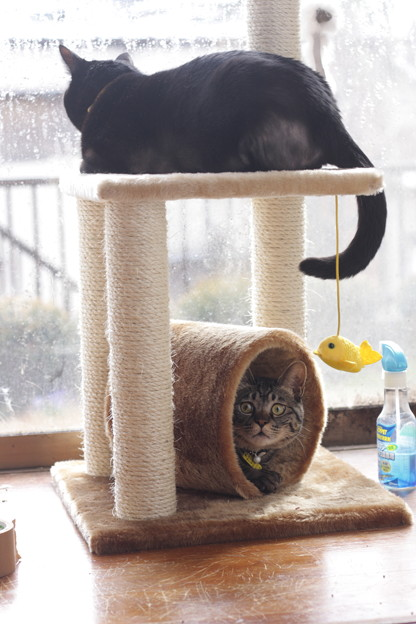 写真: トンネルは猫収納可能