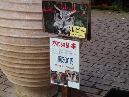 ふくろうバードショー後 (2)