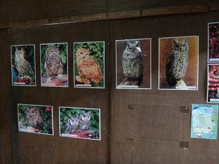 13 富士花鳥園  (3)