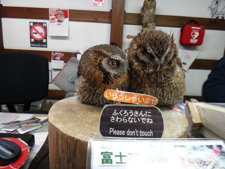13 富士花鳥園  (1)